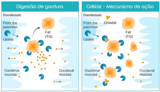 Orlistat---Mecanismo-de-ação